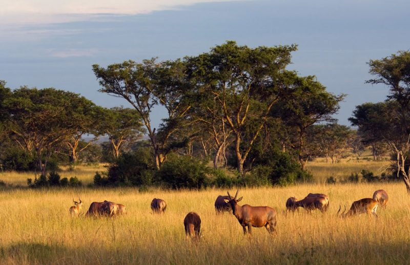 Queen_Elizabeth_National_Park_