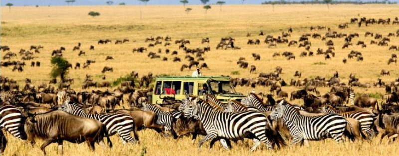 wildlife-safaris-in-tanzania