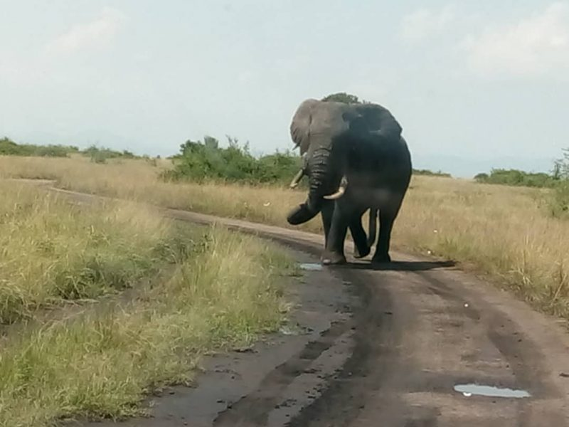 Attractions in Queen Elizabeth National Park