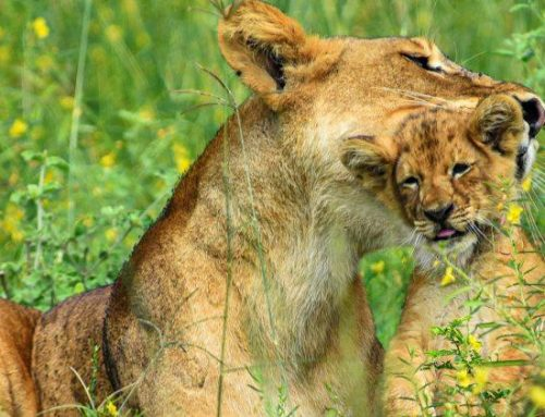 Facts That Will Make You Want to Visit Queen Elizabeth National Park