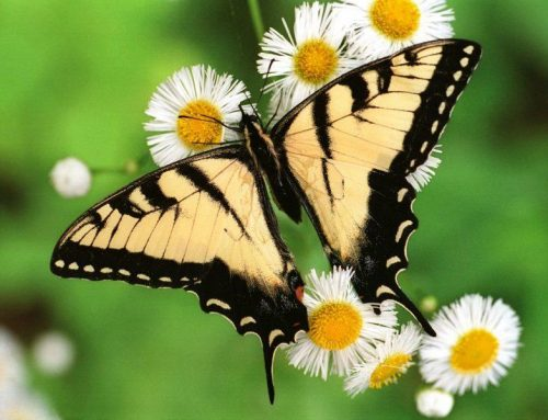 Queen Elizabeth National Park – The Best Butterfly Spot In Uganda